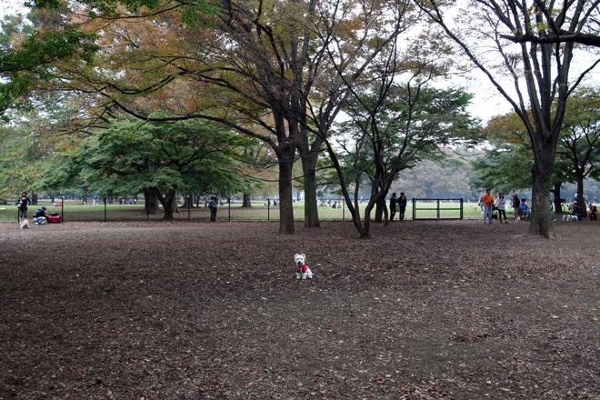 01代々木公園.jpg